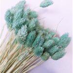 planta uscata phalaris mini aqua