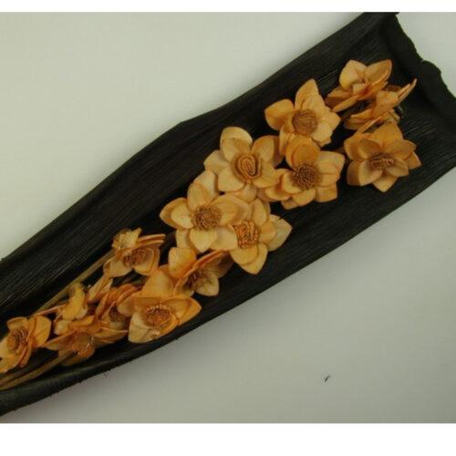 Acacia piersica