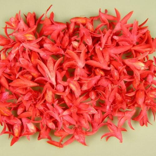 Fructe deco lily rosu