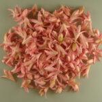 Fructe deco lily roz