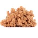 Licheni conservati Piersica
